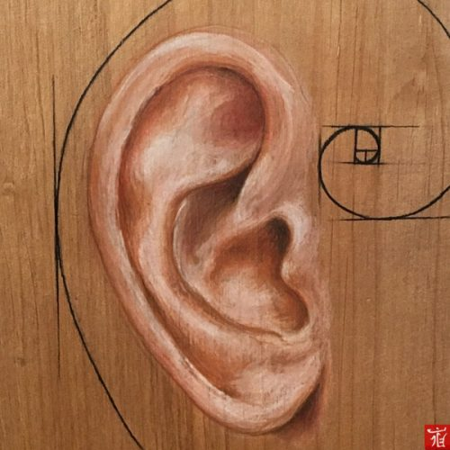 Human ear ( Magic of Fibonacci ) by Ladan.me